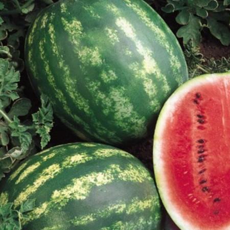 Seminte pepene verde Burebista F1 (0.5 grame), tip Crimson Sweet, Hektar