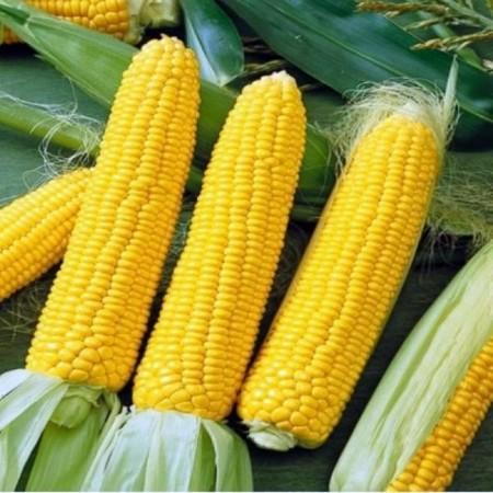 Seminte porumb Accentuate F1 (75 seminte), porumb extra dulce, Hektar Agrosel