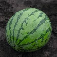 Bejo 3038 F1 - 200 sem - Seminte de pepene verde ce impresioneaza prin uniformitatea fructelor de la Bejo