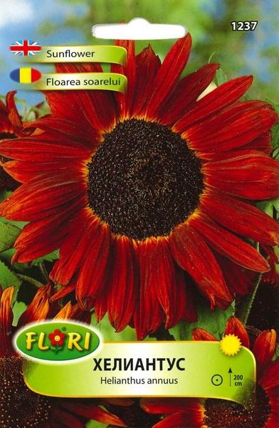 Floarea Soarelui Rosu - Seminte Flori Floarea Soarelui Rosu de la Florian
