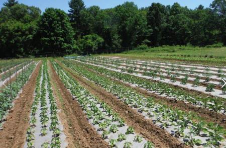 Folie transparenta mulcire legume in sere si solarii latime 4,2m/20mic/rola 820m (13.99Ron/Kg), polietilena de calitate superioara, Vatan Plastik