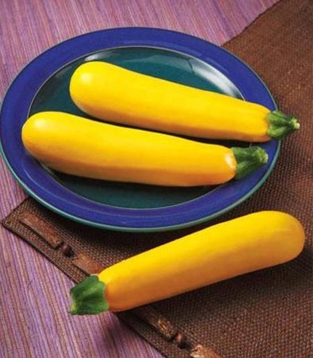 Golden Glory F1 - 500 sem - Seminte de dovlecei extratimpuriu cultivare camp/ solar tolerant la frig culoare galben intens de la Syngenta