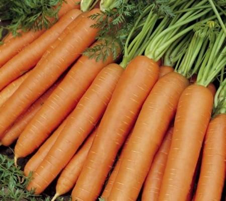 Jerada F1 - 25000 sem - Seminte de morcovi (calibru seminte 2.0 - 2.2) tip Nantes extratimpuriu 70-80 de zile si se preteaza la semanat pentru perioada februarie-iulie cu forma cilindrica si culoare portocaliu inchis de la Rijk Zwaan