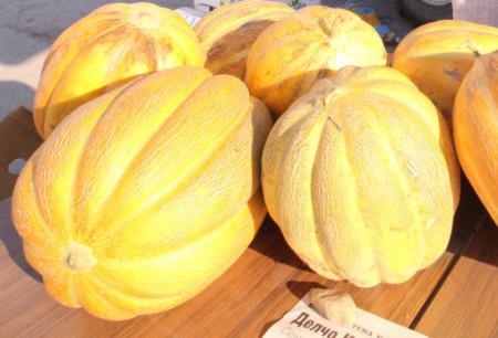 Lider F1 (500 seminte) pepene galben foarte mare 4 - 6 kg, tip feliat, Bulgaria