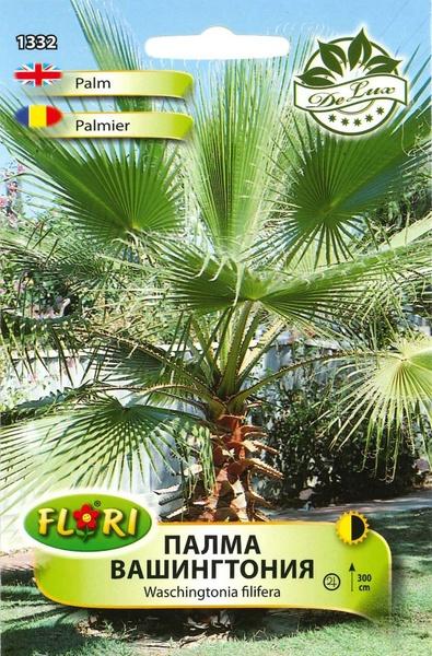 Palmier Washington - Seminte de Palmier de la Florian