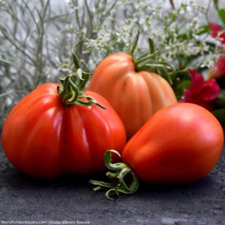 Rosii Inima de Albenga (70 seminte) de tomate crete semitimpurii, Agrara