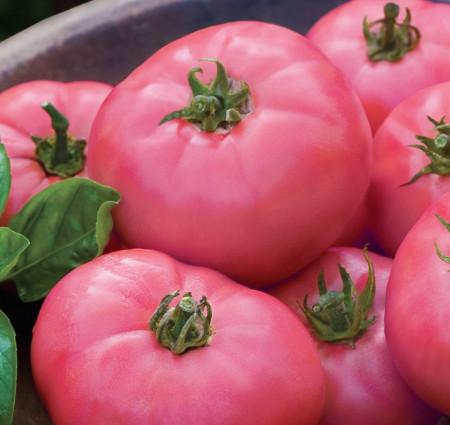 Rosii Roz (120 seminte), tomate roz, soi semitimpuriu, gust deosebit, Agrosem