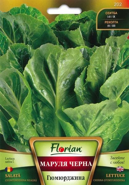 Salata Gyumyurdzhina Neagra - 2 gr - Seminte de Salata Florian Bulgaria