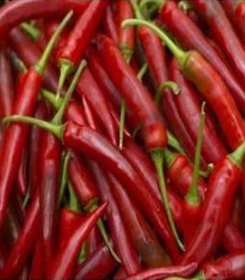 Seminte ardei iute Fireflame F1 (100 seminte), vegetativ, De Ruiter Seeds