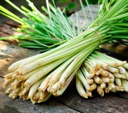 Seminte de iarba lamaioasa (Lemon grass) 0.1 gr, aroma puternica de lamaie, Florian