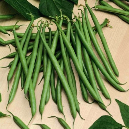 Seminte fasole Paulista (5000 seminte), pastaie verde, Seminis