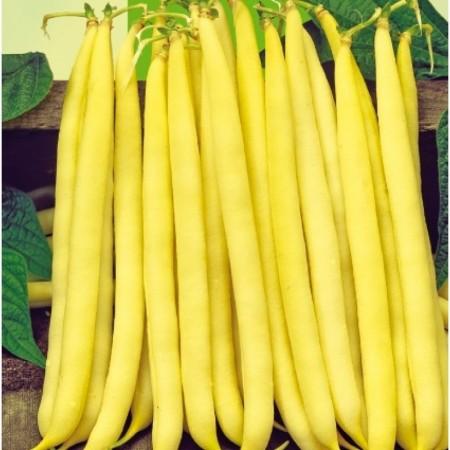 Seminte fasole pitica galbena Tambora (25 kg), Pop Vriend Olanda
