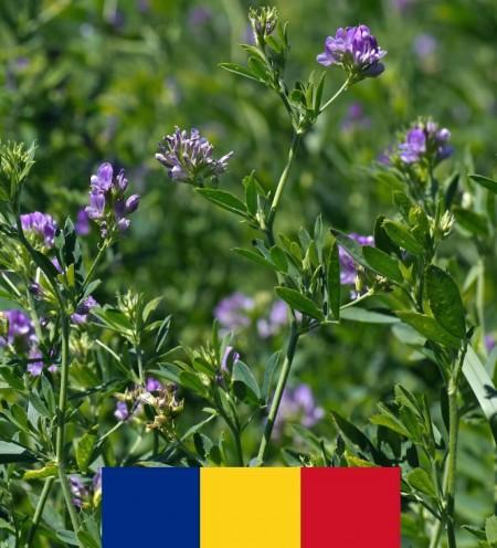 Seminte lucerna Mihaela (10 kg), soi romanesc productie foarte ridicata, 4 Agro