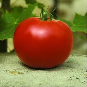 Seminte rosii Lorely F1 (1000 seminte), nedeterminate semitimpurii, calitate excelenta, Clause