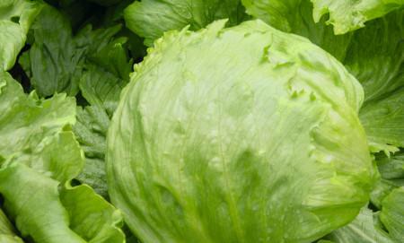 Seminte salata iceberg Times (5000 seminte), Bejo Zaden