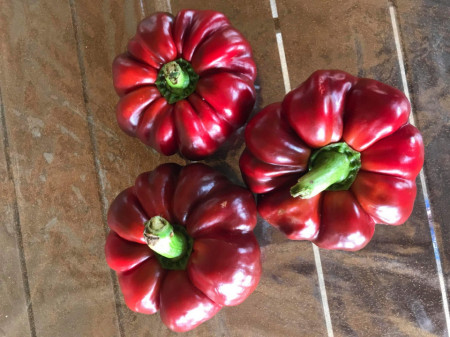 ZELENI rotund (300 seminte) seminte ardei gogosar gigant, calitati superioare