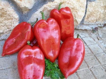 Ardei Capia de Plovdiv (Plovdivska Kapia) – 5 gr – Seminte de Ardei Capia Soi Semitimpuriu