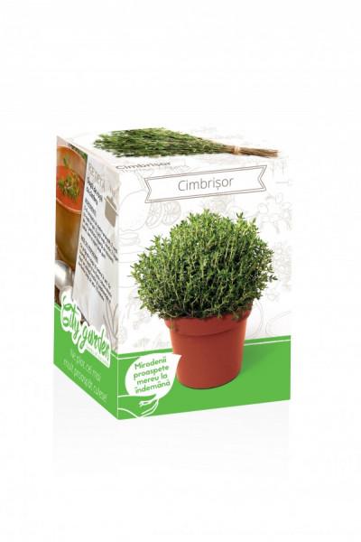 Cimbrisor - Kit plante aromatice