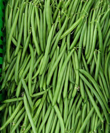 Contender (25 kg) seminte de fasole pitica verde, fara ate, pastaie cilindrica, Agrosem