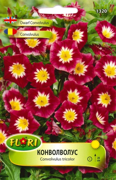 Convolvulus - Seminte flori Convolvulus | Volbura | Rochita-randunicii de la Florian