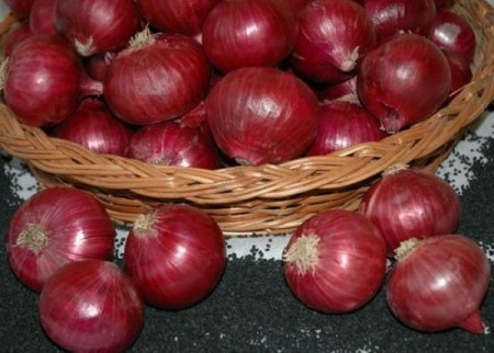 Countach F1 - 100.000 sem - Seminte de ceapa rotund-ovala 103-110 zile de culoare rosu inchis de la Nunhems