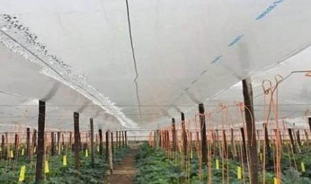 Folie de polietilena pentru protectie termica 5.5m/50mic/(pret pe ml), polietilena de calitate superioara, Sotrafa