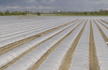 Folie mulch transp. 120cm/15mic/3000m, folie mulcire polipropilena de calitate superioara, Achaika Plastics