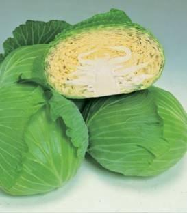 Green Lunar F1 - 2500 sem - Seminte de varza cu fructe ce ajung la maturitate dupa 80-95 de zile de la plantare frunze puternice si rezistenta buna la boli Fzarium si Xantomonas de la Takii Seeds