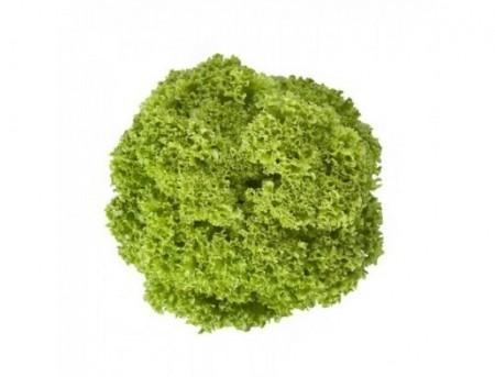 Lugano - 1000 sem - Seminte drajate de salata creata tip lollo ce se poate cultiva pe tot parcursul anului in spatii protejate cu frunze de culoare verde inchis fiind crete si crocante fara a emite tija florala de la Rijk Zwaan