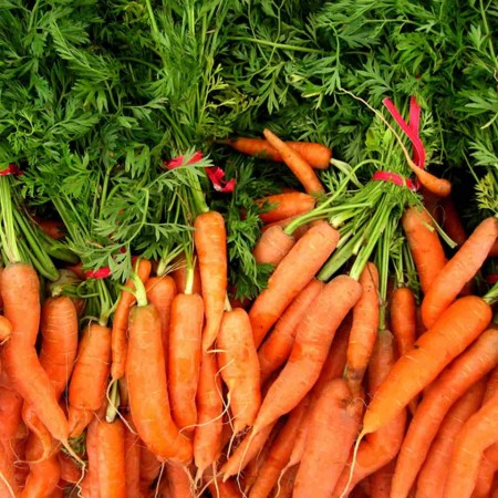 Naval F1 - 25.000 sem - Seminte de morcovi orange ( calibru seminte > 2.0 mm ) tip Nantes recomandat pentru zonele cu climat continental de la Bejo