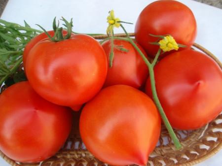 Riya F1 (50 seminte) tomate semi-determinate timpurii, Geosem Bulgaria