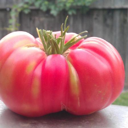 Rosii Gigant Roz HOMESTEAD (0.2 gr) Seminte de Rosii Mari Soi semitimpuriu de la Opal Bulgaria