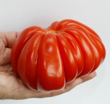 Seminte de rosii Rugantino F1 RZ (1000 seminte), nedeterminate tip inima de bou, Rijk Zwaan