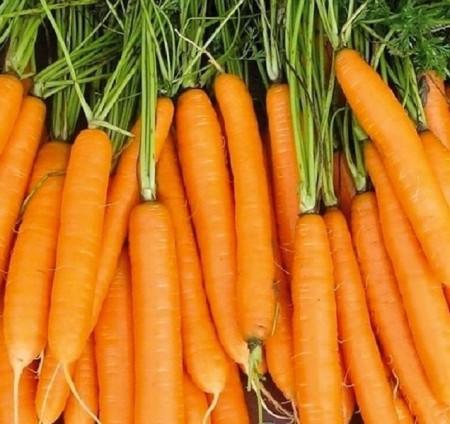 Seminte morcovi Carvora F1 (100.000 seminte), tip Nantes, Seminis