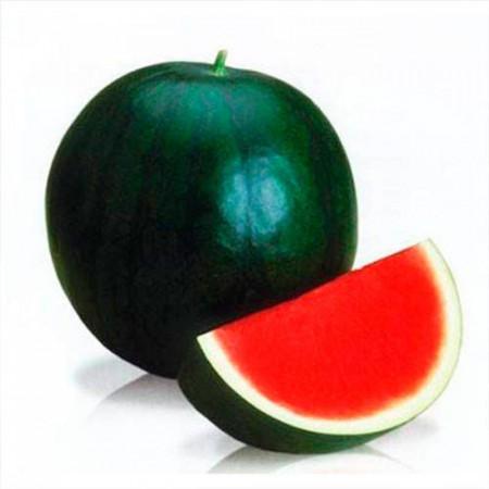 Seminte pepene verde Titania F1 (1000 seminte), tip Sugar Baby, fara seminte, Rijk Zwaan