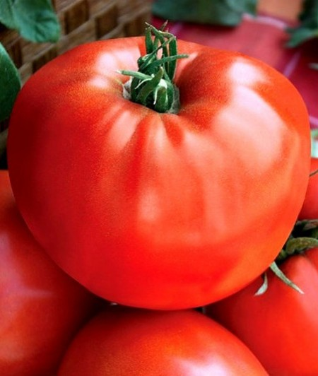 Seminte rosii Medelina (1 gr), soi nedeterminat de tomate bulgaresti mari tip gigant, Florian