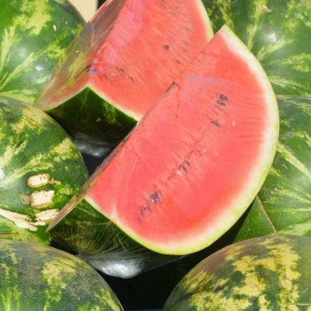 Susy F1 - 500 sem - Seminte de pepene verde foarte timpuriu tip crimson 4 - 7 kg continut ridicat de zahar si aroma placuta de la Nunhems