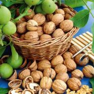 10 Puieti de nuc selectionat Romanesc Geoagiu 65, 10bucati-Pret Special, anul 2, pom fructifer nuc, greutatea medie a fructului este de 14 grame, Nucifere Regia