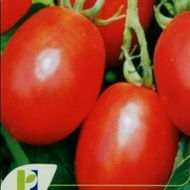Missouri - 250 gr - Seminte de tomate Missouri Oval Alungite pentru Industrializare si Conservare