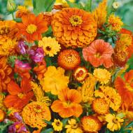 Amestec flori anuale portocalii (0,5 g), seminte de flori anuale portocalii, Agrosem