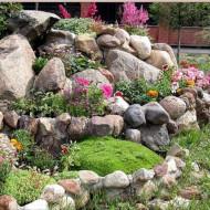 Amestec flori pentru stancarii (0,5 g), seminte de flori anuale pentru locuri pietroase, Agrosem