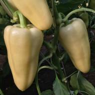 Ardei gras Rezigo (1000 seminte), timpuriu, Capsico