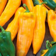 Ardei lung Corno di Toro Giallo (1 kg), seminte de ardei galbeni, fructe atarnate, conice, lungi, Agrosem