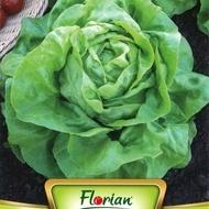Capatana Maslinie - 50 gr - Seminte de Salata Soi timpuriu de iarna Florian Bulgaria