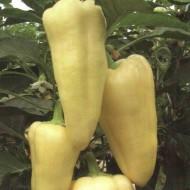 Censor F1 - 500 sem - Seminte de ardei gras dulce ascutit semitimpuriu cu crestere viguroasa si buna rezistenta la stres de la Orosco