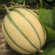 Chianti F1 - 500 sem - Seminte de pepene galben cu fruct oval si continut ridicat de zahar ce se adapteaza la diferite conditii de cultura de la Sakata