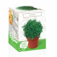 Cimbru - Kit plante aromatice