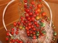 Coralina – 2 gr – Tomate Tip Cireasa Cherry Soi Nedeterminat SCDL Buzau
