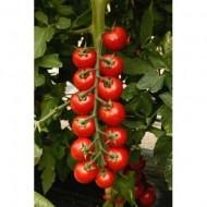 CRX 75836 F1 - 500 sem - Seminte de rosii cherry cu crestere nedeterminata fructe rotunde ferme de culoare rosie si greutate de 25-28 gr/fruct avand un gust memorabil de la Cora Seeds