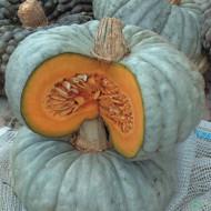 Dovleac Beretta Piacentina (8.000 seminte), seminte dovleac pentru copt pulpa dulce, gustoasa, Agrosem